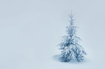 hoar frost: Majestic winter landscape. Dramatic wintry scenery. Beauty world. Instagram toning effect. Happy New Year!