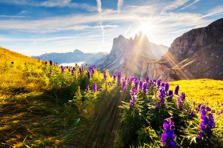 Odle-Geisler 그룹의 멋진 경치. 국립 공원 계곡 Val Gardena. Dolomites, 사우스 티롤. 위치 Ortisei, S. Cristina 및 Selva Gardena, 이탈리아, 유럽. 극적인 아침 장면입니