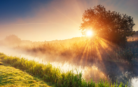Rio nebuloso fantástico com grama verde fresca na luz solar. Feixes de Sun através da árvore. Cenário colorido dramático. Rio Seret, Ternopil. Ucrânia, Europa. Mundo de beleza.