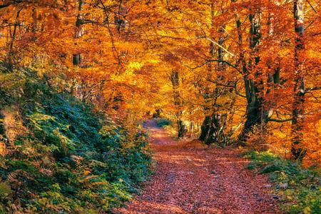 Majestic landscape with autumn leaves in forest. Carpathian, Ukraine, Europe. Beauty world. Retro filtered. Toning effect. Zdjęcie Seryjne