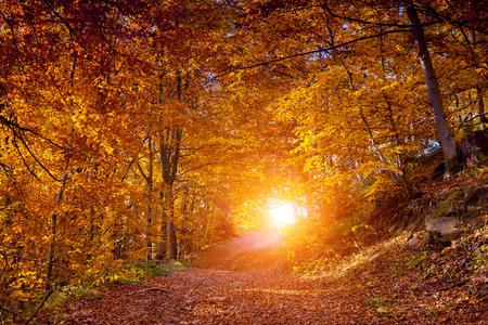 가을 장엄한 풍경은 숲에서 나뭇잎. 대로, 우크라이나, 유럽. 아름다움의 세계. 레트로 필터링. 효과를 토닝.