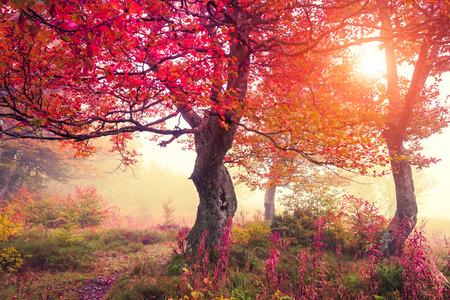숲에 단풍 나무와 장엄한 풍경. 대로, 우크라이나, 유럽. 뷰티 세계. 레트로 필터링. 효과 토닝. 스톡 콘텐츠
