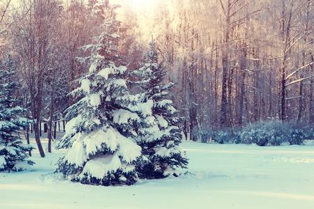 Fantastic winter landscape. Ukraine, Europe. Beauty world. photo
