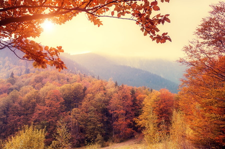 Majestic landscape with autumn trees in forest. Carpathian, Ukraine, Europe. Beauty world. Retro filtered. Toning effect.