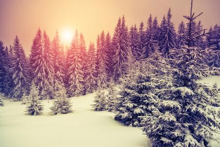 christmas morning: Amazing evening winter landscape. National Park. Carpathian, Ukraine, Europe. Beauty world. Retro style filter.