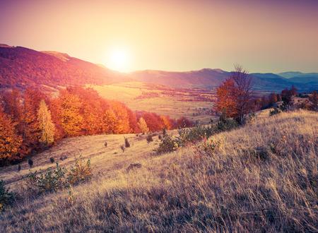朝の空の下で幻想的な日当たりの良い丘。劇的な風景。カルパチア、ウクライナ、ヨーロッパ。美の世界。レトロ フィルタ リングします。 写真素材