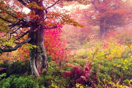 Majestueuze landschap met herfst bomen in het bos. Karpaten, Oekraïne, Europa. Beauty wereld. Retro gefiltreerd. Toning effect.