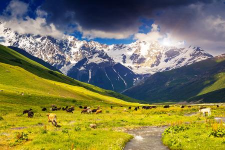 shkhara: Alpine meadows at the foot of Mt. Shkhara in Upper Svaneti, Georgia