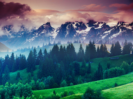 nature natural: Beautiful view of alpine meadows Stock Photo
