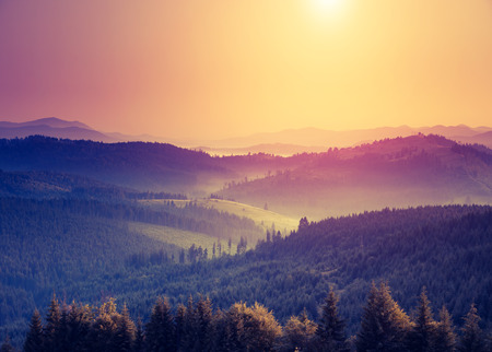 scenery: Fantastic sunny hills under morning sky. Dramatic scenery in Carpathian, Ukraine