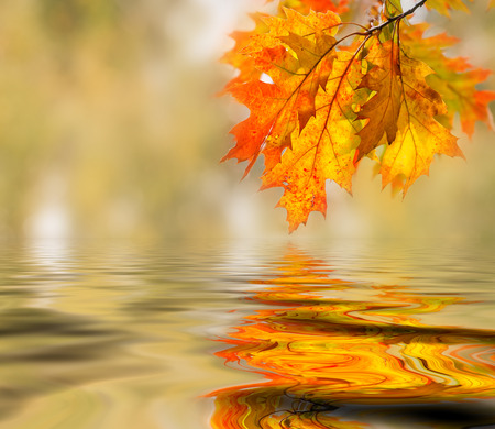 water on leaf: Bright colored leaves on the branches in the autumn forest.