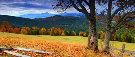L'autunno paesaggio di montagna con bosco colorato Archivio Fotografico - 38043819