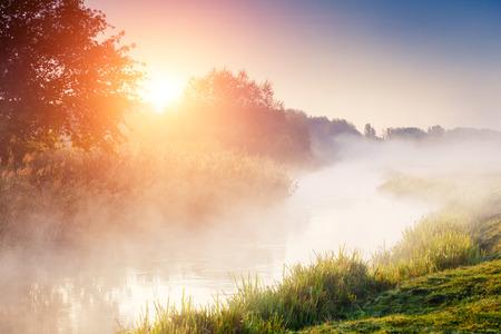 日光の新鮮な緑の芝生と幻想的な霧の川。ツリーを通じて太陽ビーム。劇的なカラフルな風景。セレト川、テルノーピリ。ウクライナ、ヨーロッパ