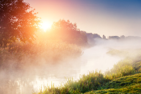 tranquility: Fantastic foggy river with fresh green grass in the sunlight. Sun beams through tree. Dramatic colorful scenery. Seret river, Ternopil. Ukraine, Europe. Beauty world. Stock Photo