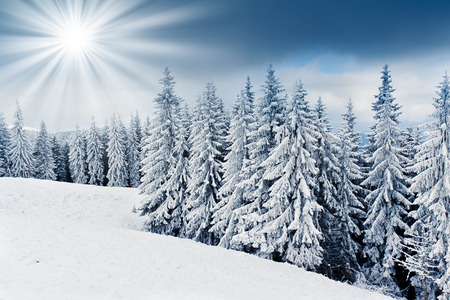 christmas landscape: Trees covered with hoarfrost and snow in mountains. Stock Photo