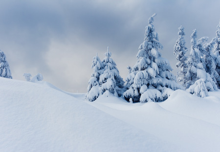 Trees covered with hoarfrost and snow in mountains. Stock Photo