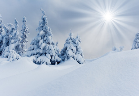 Trees covered with hoarfrost and snow in mountains. Stockfoto