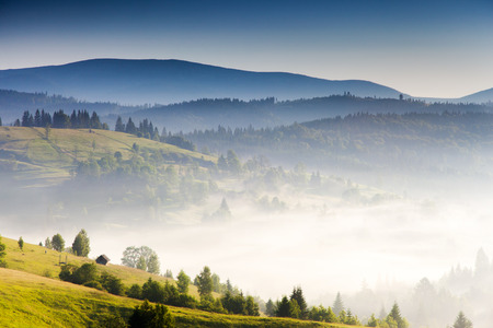 heaven background: Fantastic foggy day and bright hills by sunlight. Dramatic morning scenery in Carpathian, Ukraine