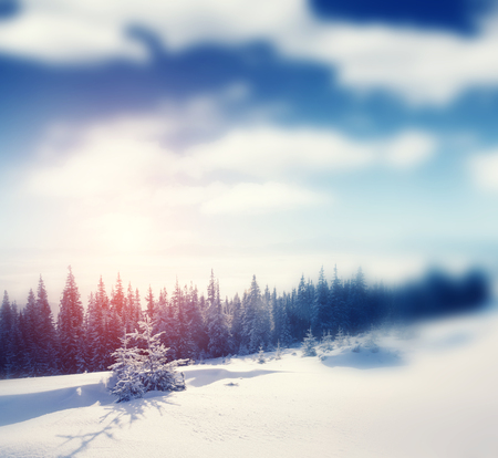 covered in snow: Beautiful winter panorama with snow covered trees Stock Photo