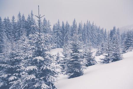 Majestic winter landscape glowing by sunlight. Dramatic wintry scene. Carpathian, Ukraine