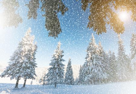 christmas winter: Fantastic mountain landscape glowing by sunlight. Dramatic wintry scene. Carpathian, Ukraine