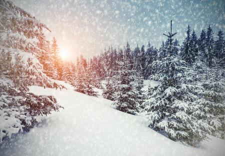 日光で輝く雄大な冬の風景です。冬の劇的なシーン。カルパチア、ウクライナ