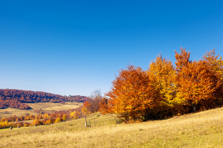 majestic mountain: Majestic colorful landscape with sunny beams at mountain valley. Natural park. Dramatic morning scene. Red autumn leaves. Carpathian, Ukraine, Europe. Beauty world.