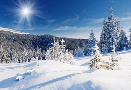 산에서 겨울 나무 신선한 눈으로 덮여