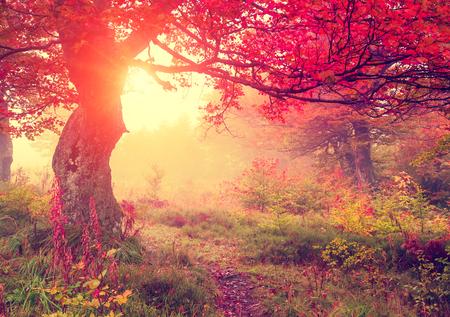 Majestueuze herfst bomen in het bos gloeien door zonlicht. Rode herfstbladeren. Dramatische ochtend scène. Karpaten, Oekraïne, Europa. Schoonheid wereld. Retro-stijl filter. Instagram toning effect. Stockfoto