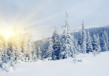 winter trees: Beautiful winter landscape with snow covered trees Stock Photo