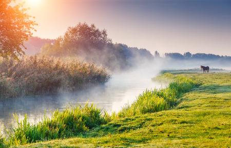 Río niebla fantástica con hierba verde fresca en las vigas de sol. Paisaje colorido dramático. Río Seret, Ternopil. Ucrania, Europa. Mundo de la belleza.