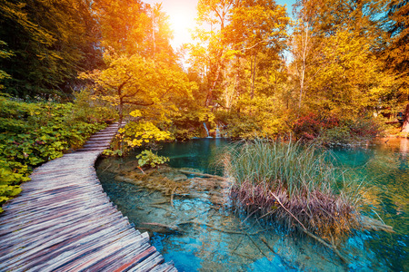 croatia: Majestic view on lake with turquoise water and sunny beams in Plitvice Lakes National Park. Forest glowing by sunlight. Croatia. Europe. Dramatic morning scene. Beauty world.