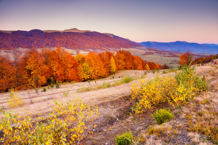 majestic mountain: Majestic colorful landscape with sunny beams at mountain valley. Natural park. Dramatic morning scene. Red autumn leaves. Carpathians, Ukraine, Europe. Beauty world.