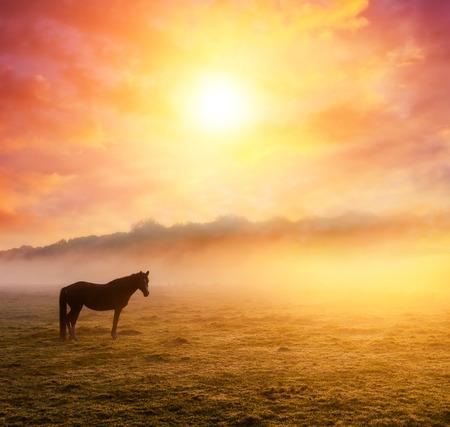 오렌지 맑은 광선에 일몰에 목장에서 방목 아라비아 말. 극적인 안개 장면입니다. Carpathians, 우크라이나, 유럽. 뷰티 세계. 스톡 콘텐츠