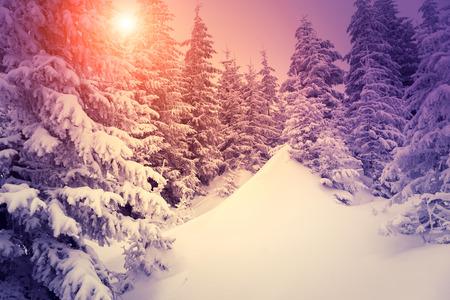 montañas nevadas: Fantástico paisaje resplandeciente por la luz solar. dramática escena invernal. Parque Natural. Cárpatos, Ucrania, Europa. mundo de la belleza. filtro de estilo retro. Instagram efecto tonificante. violeta vivo. ¡Feliz año nuevo!