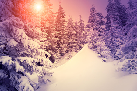 snowy mountains: Fantastic landscape glowing by sunlight. Dramatic wintry scene. Natural park. Carpathian, Ukraine, Europe. Beauty world. Retro style filter. Instagram toning effect. Vivid violet. Happy New Year! Stock Photo