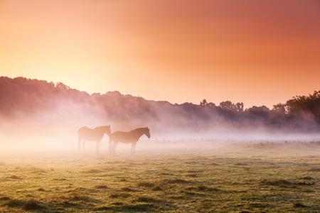 pastures: Arabian horses grazing on pasture at sundown in orange sunny beams. Dramatic foggy scene. Carpathians, Ukraine, Europe. Beauty world.