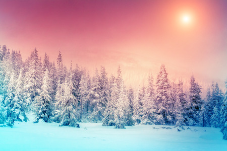 snow  ice: Fantastic evening landscape glowing by sunlight. Dramatic wintry scene. Natural park. Carpathian, Ukraine, Europe. Beauty world. Retro filter.  Stock Photo
