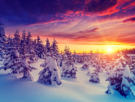 Fantastic evening landscape glowing by sunlight. Dramatic wintry scene. Natural park. Carpathian, Ukraine, Europe. Beauty world. Retro filter.  Stock Photo