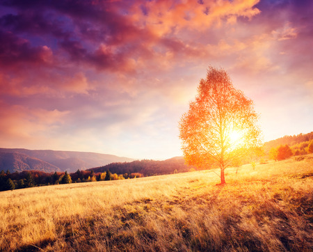 majestic mountain: Majestic alone birch tree on a hill slope with sunny beams at mountain valley. Dramatic colorful morning scene. Red and yellow autumn leaves. Carpathians, Ukraine, Europe. Beauty world.