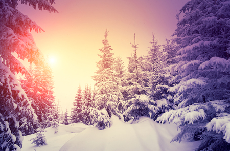 Fantastic landscape glowing by sunlight. Dramatic wintry scene. Natural park. Carpathian, Ukraine, Europe. Beauty world. Retro style filter.  Foto de archivo
