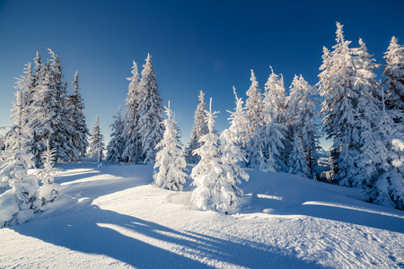 Majestic winterlandschap gloeiende door zonlicht. Dramatische winterse scène. Carpathian, Oekraïne, Europa. Beauty wereld. Gelukkig nieuwjaar! Stockfoto - 47565800