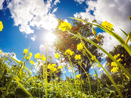 flowers sun: Fantastic views of the garden with blue sky. Mediterranean climate. Sicily island, Italy, Europe. Beauty world. Stock Photo