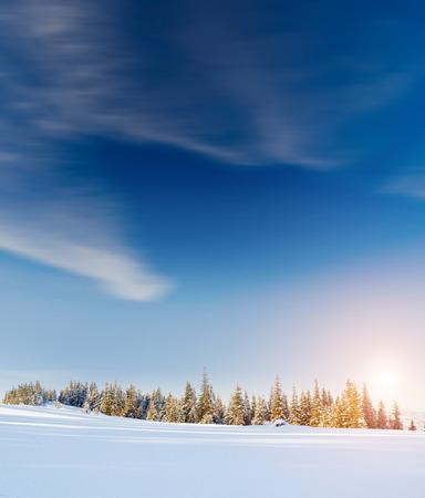 abetos: Fantástico paisaje resplandeciente por la luz solar. dramática escena invernal bajo el cielo azul. Cárpatos, Ucrania, Europa. mundo de la belleza. Filtro retro.