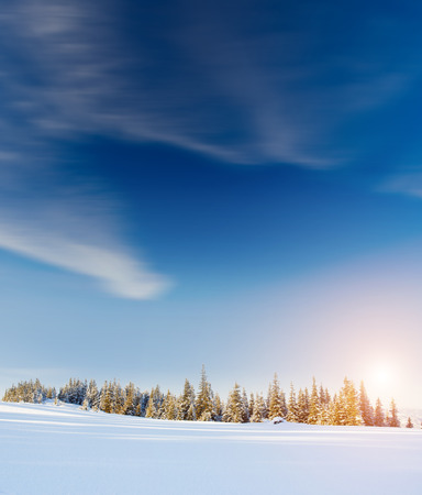 snow ski: Fantastic landscape glowing by sunlight. Dramatic wintry scene under blue sky. Carpathian, Ukraine, Europe. Beauty world. Retro filter.