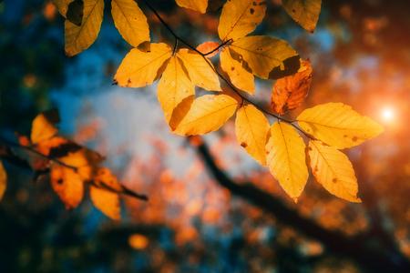 Majestueuze kleurrijke bos met zonnige balken. Natuurpark. Dramatische ochtend scène. Rode herfstbladeren. Karpaten, Oekraïne, Europa. Beauty wereld. Stockfoto - 47565692