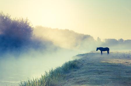 Arabian horses grazing on pasture at sundown in orange sunny beams. Dramatic foggy scene. Carpathians, Ukraine, Europe. Beauty world. Retro style filter. Instagram toning effect. Stockfoto
