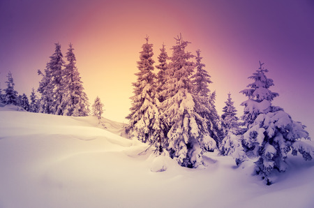 winter holiday: Fantastic landscape glowing by sunlight. Dramatic wintry scene. Natural park. Carpathian, Ukraine, Europe. Beauty world. Retro style filter.  Stock Photo