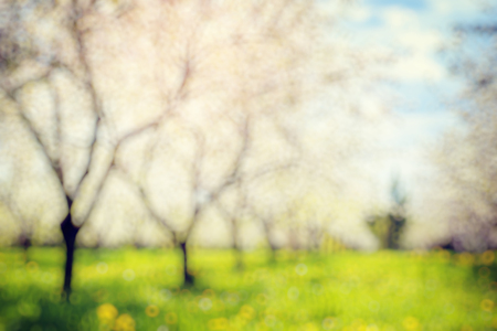 vintage landscape: Blooming apple orchard in spring and blue sky. Retro filtered. Beauty world. Natural blurred background. Soft light effect.