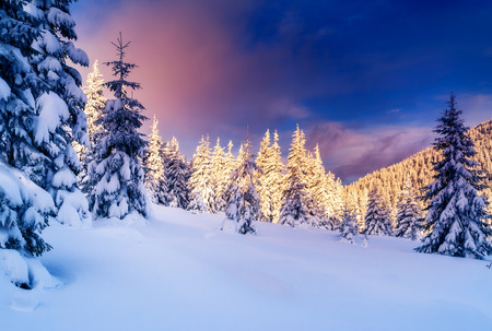 winter holiday: Fantastic evening landscape glowing by sunlight. Dramatic wintry scene. National Park Carpathian, Ukraine, Europe. Beauty world. Retro style filter.